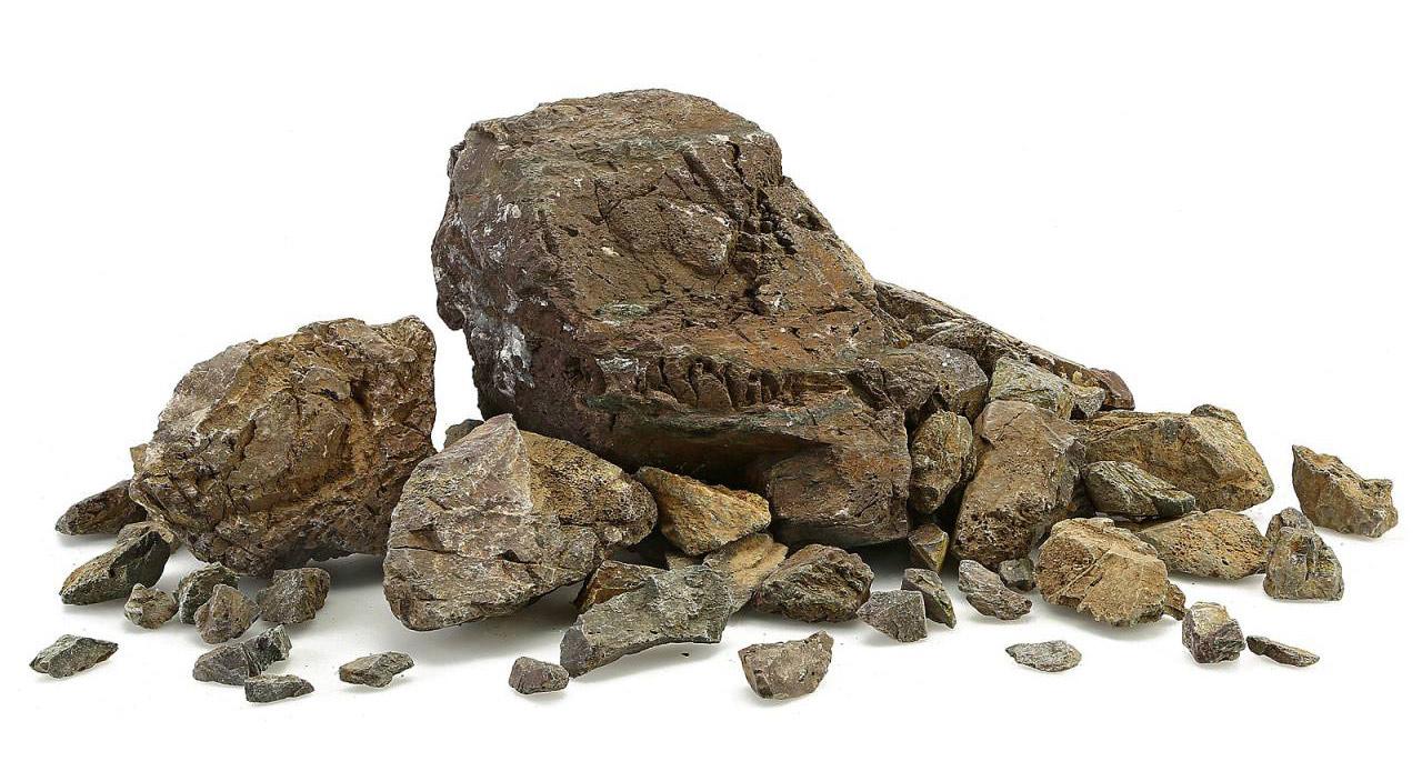 manten steen