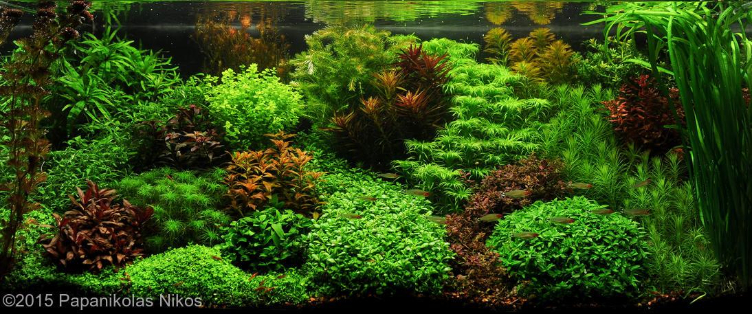 De Verschillende Aquascape Stijlen Aquascapen Nl