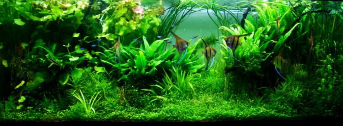 jungle stijl
