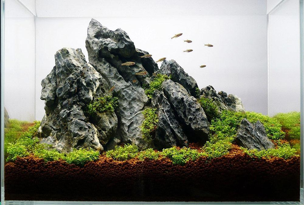 seiryu steen
