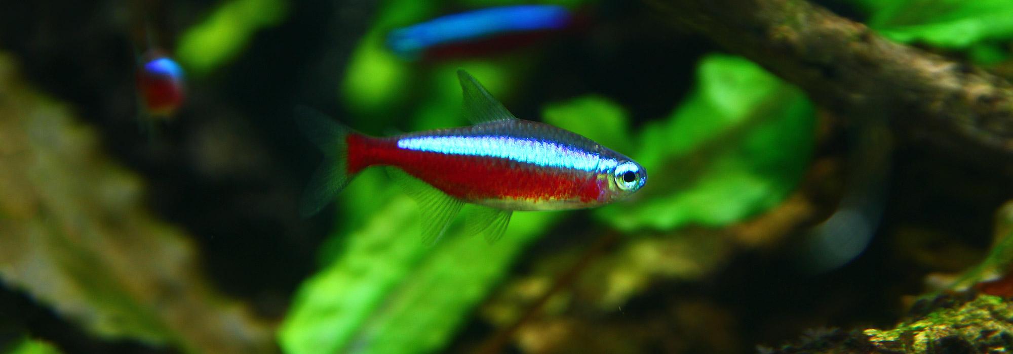 mini aquarium vissen