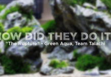 The Rupture - Green Aqua